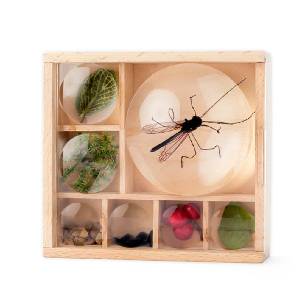 Bug Box Display Case