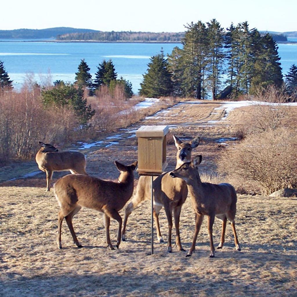 Wooden Wildlife Seed-Feeder