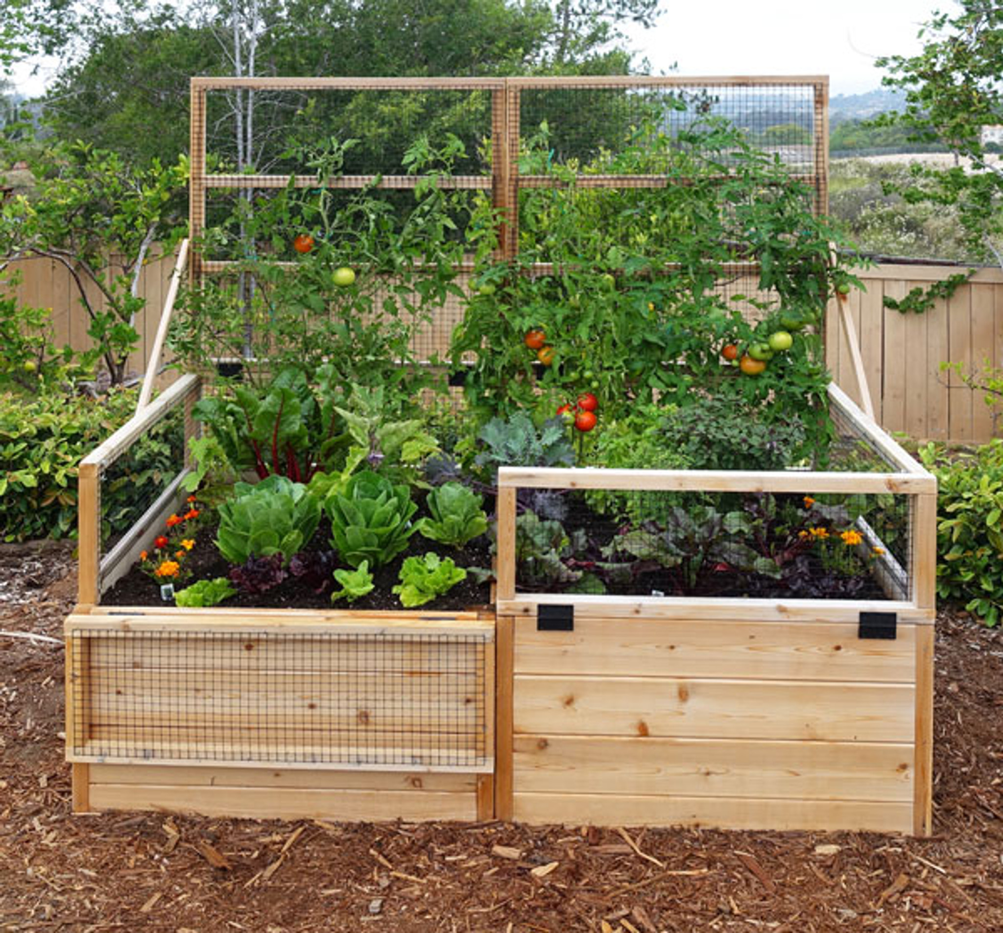 3 X 6 Raised Garden Bed With Hinged Fencing And Trellis Eartheasy Com