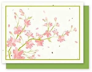 Grow-A-Note Cherry Blossom Box Set - 4 Cards