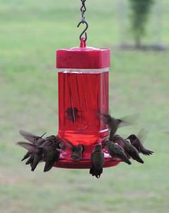 Hummingbird Feeder - Two Pack