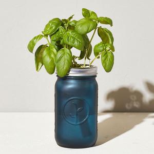 Basil Garden Jar
