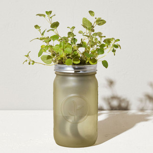 Oregano Garden Jar