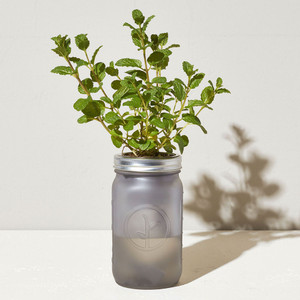 Mint Garden Jar