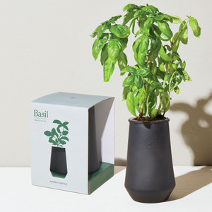 Tapered Tumbler Basil Grow Kit