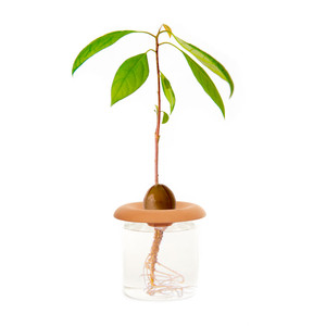 Terracotta Seed Sprouters  - Set of 3