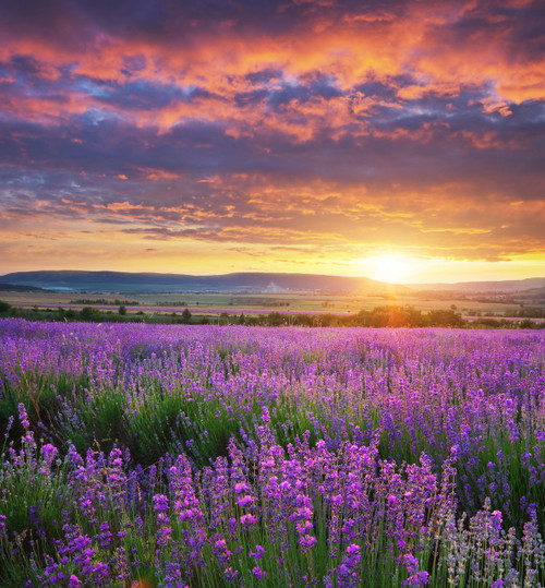 An enchanting meadow fringed with sprigs of lavender.  Infused with natural essential oils.  Just Add Water to Refresh. Best Damn Scents - Dunham's Essentials, Dunham's Home