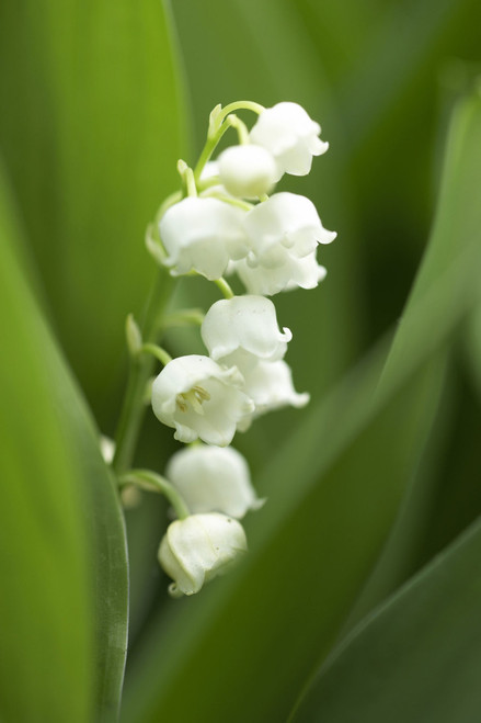 Lilly of the Valley a Fragrance very true to name Lily of the Valley aroma.  Just Add Water to Refresh. Best Damn Scents - Dunham's Essentials, Dunham's Home