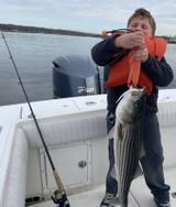 Spring Striped Bass on Soft Plastics
