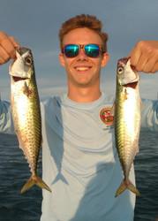 Chub Mackerel Invasion