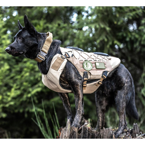 Level IIIA Bulletproof K-9 Titan Vest on Dog