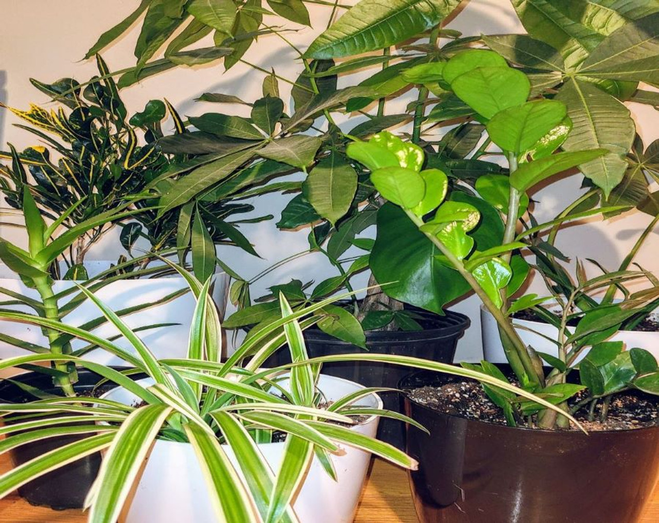 Different indoo plants and pots for sale including monstera, snake plant, zz, spider
