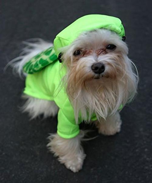 Turtle Dog Costume
