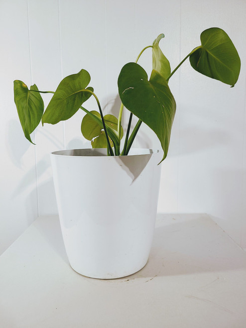 Monstera's are great for that foresty look!