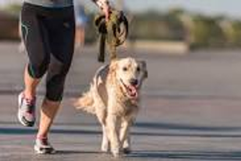 How To Teach Your Dog To Run With You!