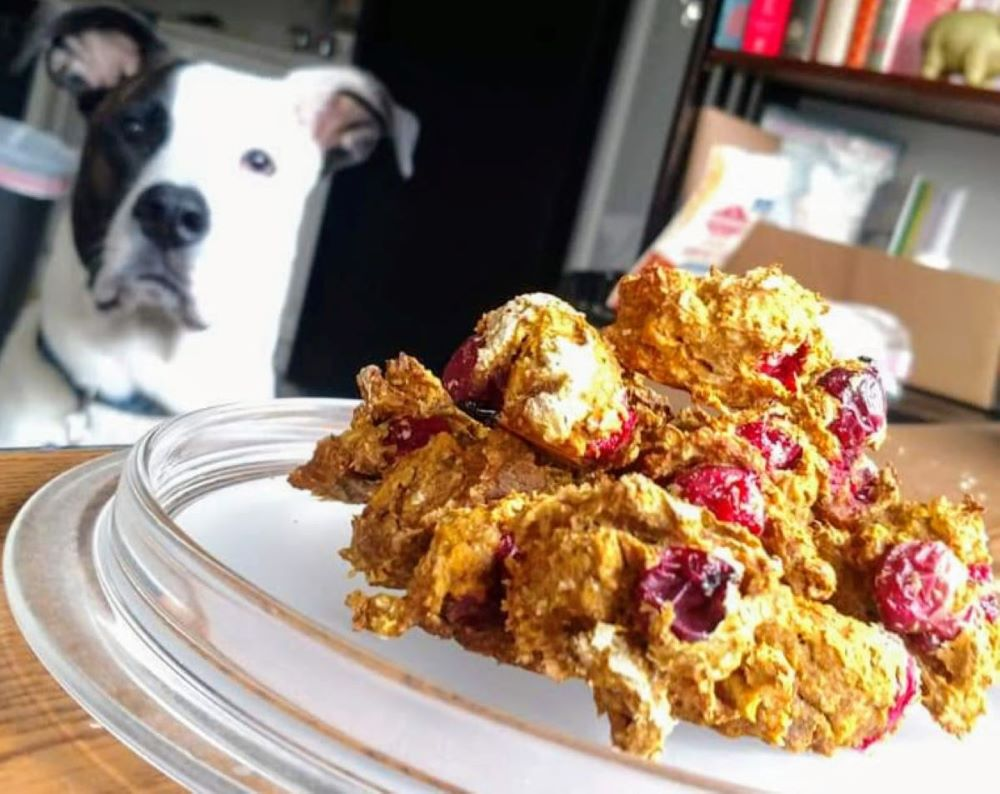 Dog looking longingly at fresh baked cranberry dog cookies