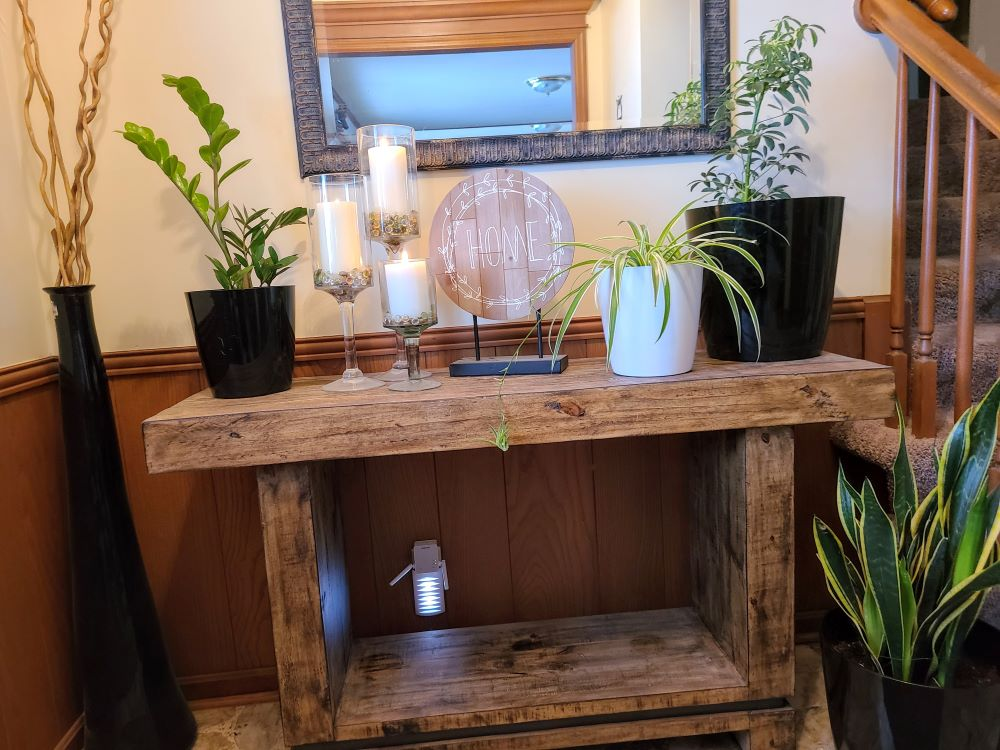 live potted house plants for sale