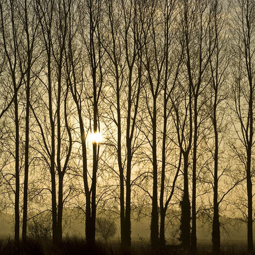 Poplars At Sunrise Zen Puzzle