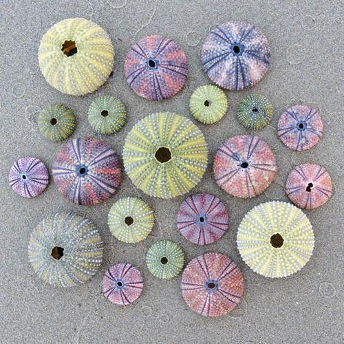 Sea Urchins Zen Puzzle