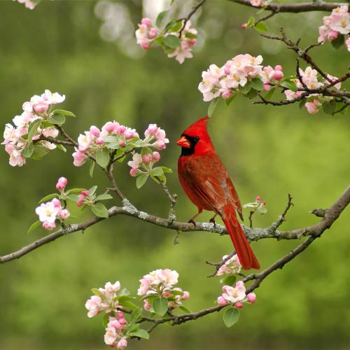 Summer Cardinal Zen Puzzle