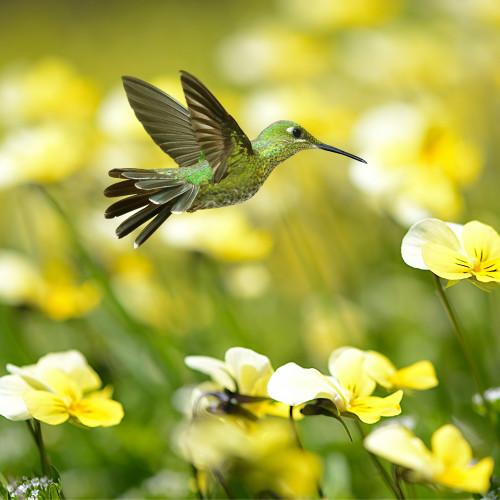 Summer Hummingbird Zen Puzzle
