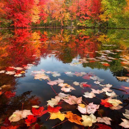 Fallen Leaves  Zen Puzzle