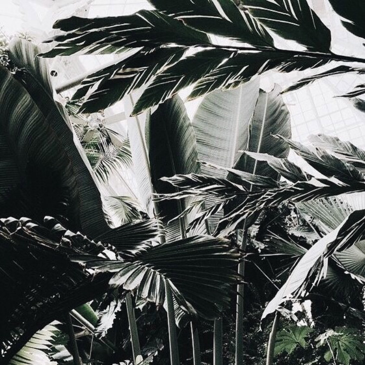 palm fronds outside
