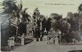 SYDNEY , THE FOREST BOTANIC GARDENS NEW SOUTH WALES EARLY 1900'S POSTCARD.