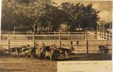 EARLY 1900'S SYDNEY ZOOLOGICAL GARDENS, DEERS NSW POSTCARD. GIOVANARDI NO 199