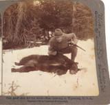 USA 1904, WYOMING BEAR HUNT, UNDERWOOD & UNDERWOOD STEREOVIEW CARD.