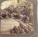 CENTRAL AMERICA 1904, COSTA RICA BANANA FARM, UNDERWOOD STEREOVIEW CARD.
