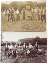3 x EARLY 1900s RPPC REAL PHOTO POSTCARDS. POTATO FARMING. POSSIBLY NZ.