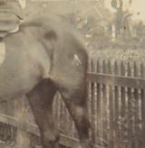 WW1 REAL PHOTO POSTCARD. OFFICER MOUNTED ON HORSEBACK. BROADARROW ON RUMP ??