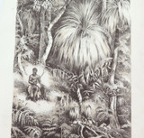 1879 HISTORY of AUSTRALASIA LITHOGRAPH. TASMANIAN FOREST SCENE.