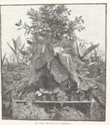 "1886 WOOD ENGRAVING ""IN THE BOTANICAL GARDENS"""
