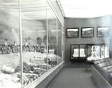 RARE 1924 BRITISH EMPIRE EXHIBITION LARGE SILVER GELATIN PHOTO AUSTRALIAN COTTON
