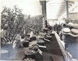 RARE 1924 BRITISH EMPIRE EXHIBITION LARGE PHOTO. AUSTRALIAN ORCHID SCENE.