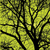 image-free-vector-freebie-tree-branches