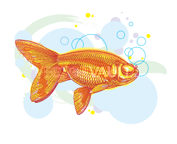 image buy vector goldfish illustration