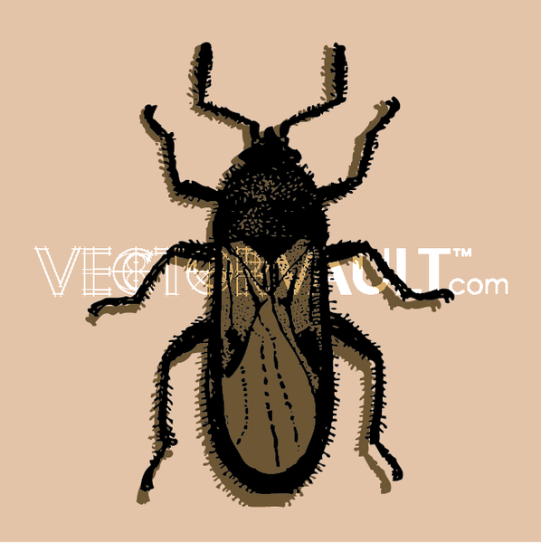 vector roach