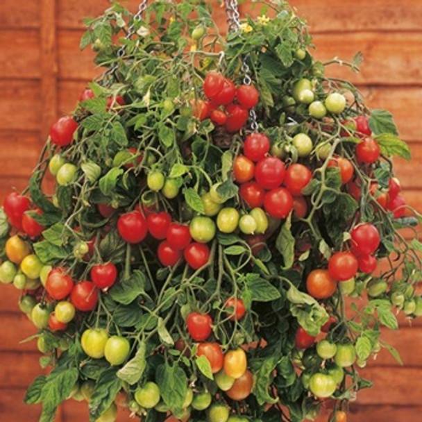 Tomato - Tumbling Tom Red - Seed Megastore - sku 1012