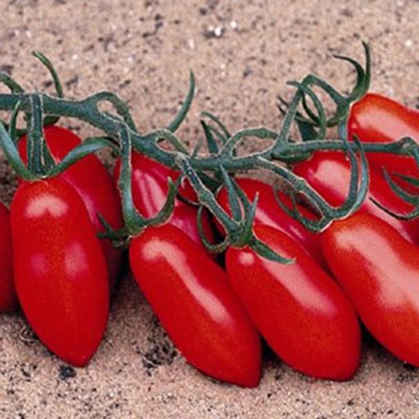 Tomato - F1 Trilly - Seed Megastore - sku 1046