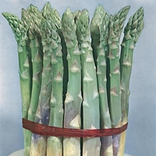Asparagus - Mary Washington - Seed megastore sku 11