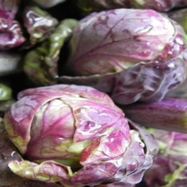 Brussels Sprout -Red Ball - seed megastore - sku 138