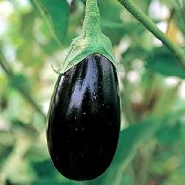 Aubergine - Black Beauty - seed megastore - sku 15