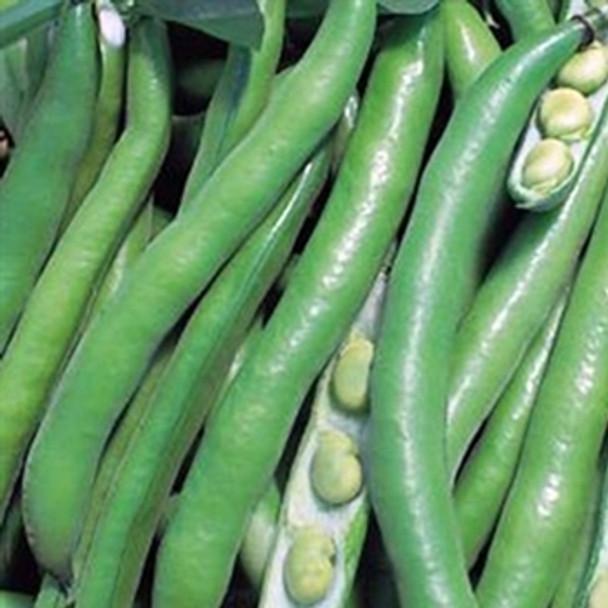 Broad Bean -Bunyards Exhibition - Seed Mega Store - sku 86