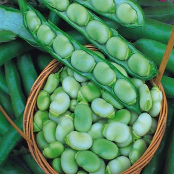 Broad Bean - Masterpiece Green - Seed Megastore - sku 99
