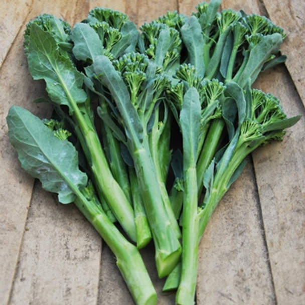 Broccoli F1 Atlantis - seed megastore - sku 112