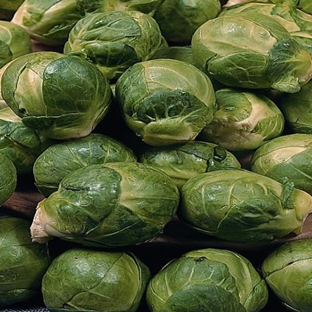 Brussels Sprout -Seven Hills - seed megastore - sku 114