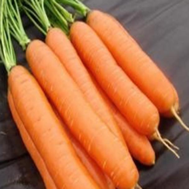 Carrot - Darina - Seed Megastore - Sku 207